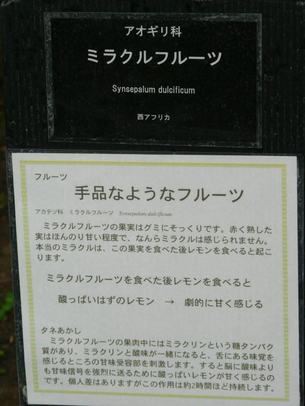 P1300347
