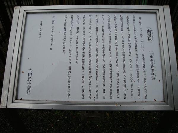Dsc04954