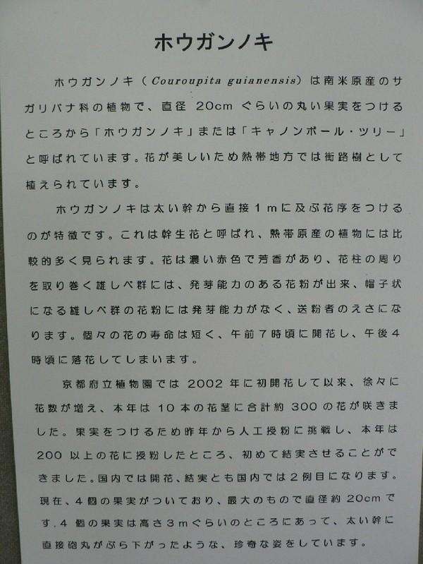 P1150091